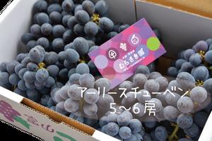 ぶどう アーリースチューベン(5〜6房) お届け時期8月上旬〜
