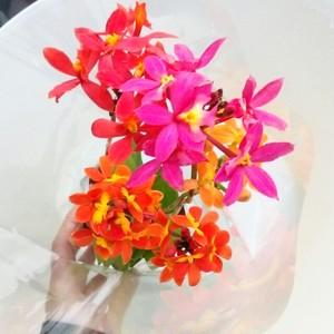 エピデンドラムMIXの花束・1箱