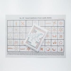片山津温泉ファンジン イグアノドン 特装版ポスター(ジン付き) 金黒