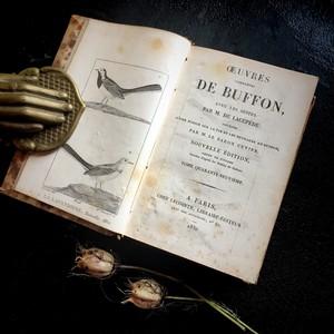 ビュフォン全集 博物誌 続鳥類