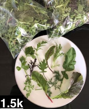 ベビーリーフ1.5kg (Baby Leaf 1.5kg)