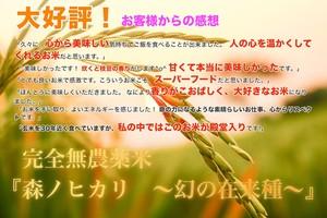 玄米10k 大好評の完全無農薬玄米『森ノヒカリ ~幻の在来種~』 送料無料