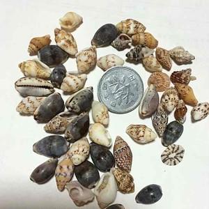 小さな貝殻の詰め合わせ001