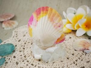 貝がらのミニランプ(桃色/小)