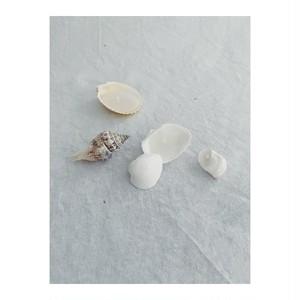 Seashell candle(parafin wax & micro wax)