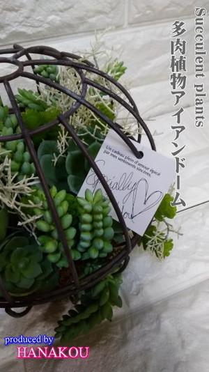 『多肉植物☆アイアンドーム Green』5500円(tanikuaiandorm01)