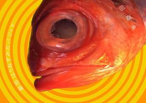 第一回公演『回遊魚』DVD
