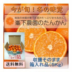 食べるジュース 完熟たんかん(収穫そのまま 5Kg前後)※購入者への送付限定