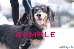 【動物】3枚セット 犬 ポストカード
