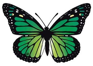 オオカバマダラ(緑)