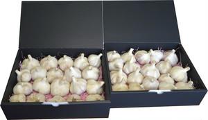 令和2年 新物 北海道常呂(ところ)町産 ピンク種 にんにく Lサイズ以上 9月、10月限定販売 (1.5kg×2)