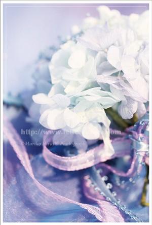 ポストカード*【June bride】