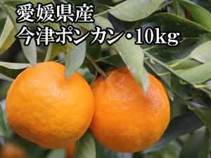 今津ポンカン:10kg