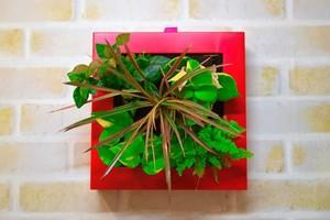 サントリー開発の壁掛けグリーン midorie ミドリエ5苗タイプ