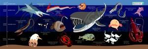 海の生物マイクロファイバータオル/ウバザメ/チョウチンアンコウ小さいサイズ