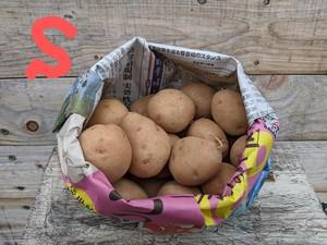 【S】自社農場・自然栽培じゃがいも(さやあかね)1キロ
