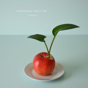 apple pot  ドリミオプシス・マクラータ