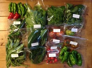 31年度 80サイズ*無農薬野菜BOX