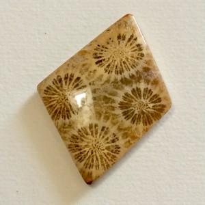 フォッシルコーラル 天然石