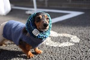 DOG tsumood -machi- Sサイズ