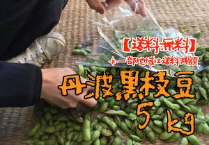 【無農薬・無化学肥料】丹波黒枝豆 5kg(送料無料!※一部地域は送料減額)
