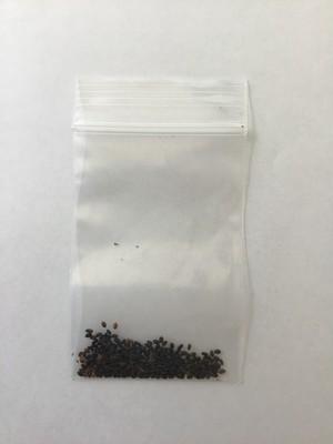 ホーリーバジルの種(約100~150粒)