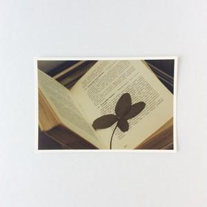 ポストカード 四つ葉