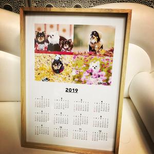 cocolio 2019年カレンダー