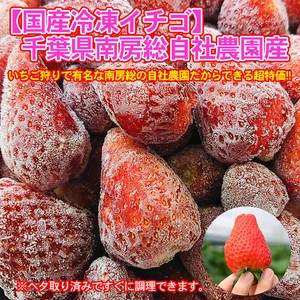 【訳あり】朝どりいちご 冷凍 3kg 業務用 千葉県南房総の自社農園栽培苺 イチゴジャム・ソースなどに最適