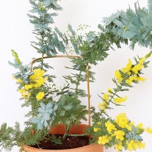 plant prop M