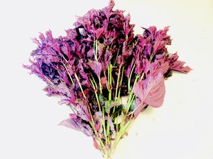 赤紫蘇500g 茎付き