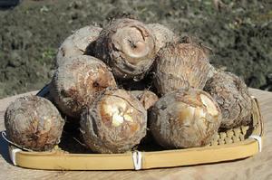 H.29産 富山県産 里芋(大和)2kg袋詰め