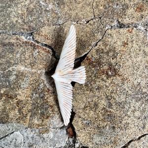 中嶋寿子「砂の花」のブローチ 15 (bird)