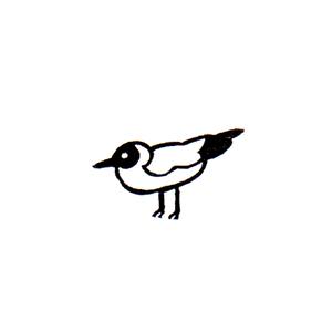 アホウドリ (イ) Albatross