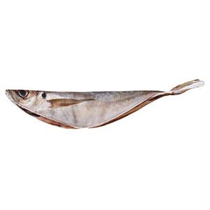 焼き魚のけいぐるみ アジ
