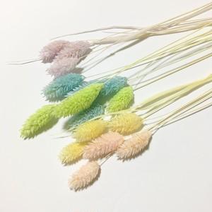 【mixカラー】ポアプランツ ファラリス ドライフラワー