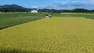 【26.5kg】大和田さんちの美味しいお米