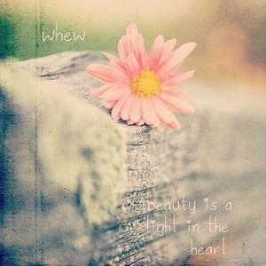 whew 6th 配信限定シングル beauty is a light in the heart(MP3)