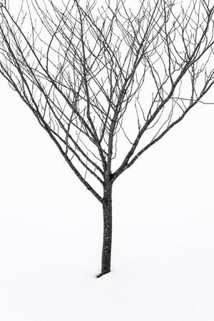 髙﨑紗弥香 / piece#6