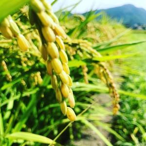 【定期購入/1ヶ月毎】大自然米【精白米】5kg x 6回(半年)5%お得!