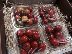 トマト4種セット
