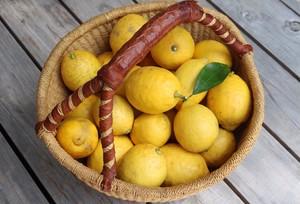 庭育ちの不揃いレモンBOX