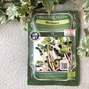 【スプラウト】そば ORGANIC SEEDS  有機種子*固定種