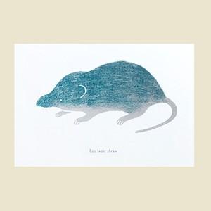 トガリネズミ(緑)のポストカード