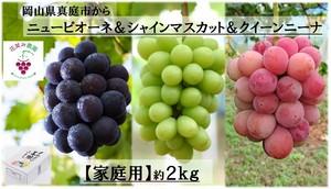 彩り3種ミックス(ピオーネ&シャインマスカット&クイーンニーナ)2kg【家庭用】