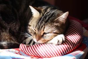 猫のアゴ乗せ枕