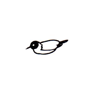 アホウドリ (ハ) Albatross