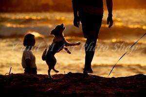 ジャンプする犬・夕暮れのワンコのシルエットがロマンチック・犬好きあなたに・ワンコと海・5枚組/ポストカード