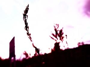 夕陽 (紫) 7