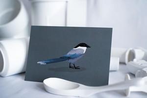 POSTCARD-BIRD